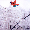 """From the living room window.  The stained glass cardinal begging the question """"Where have all the birds gone?"""""""