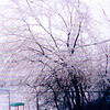 Icy trees in the back yard but not yet covering the the wires and the baby slide is untouched.