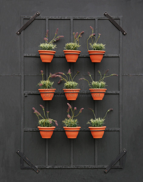 """Lavender Pots 3 x 3,"" color photo"