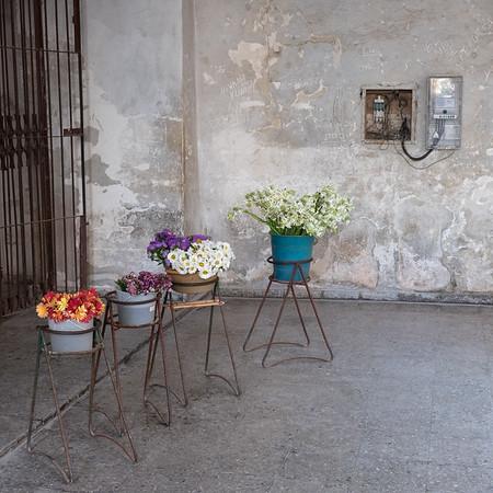Simply Flowers, Havana.