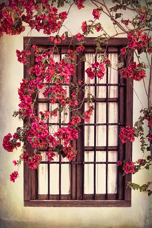 Bougainvillea and Old Window