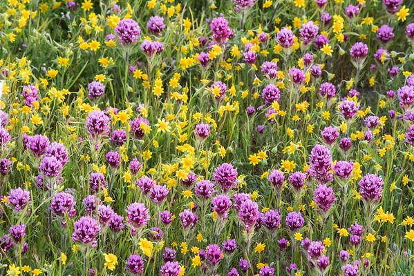 Cheerful Meadow