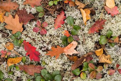 Autumn on the Forest Floor