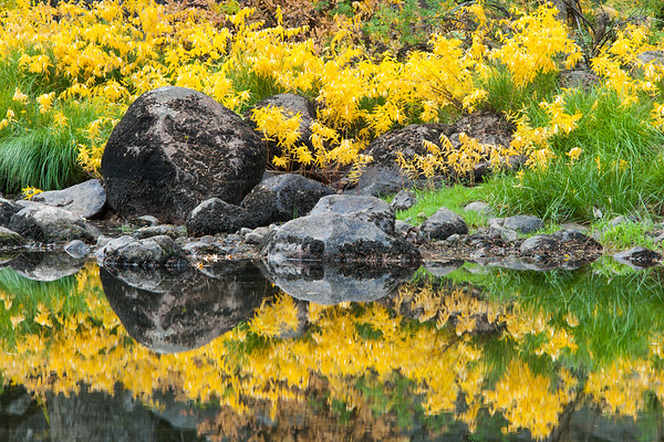 Autumn Reflection in the Merced River.