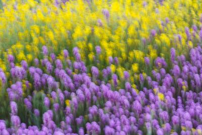 Meadow Impression