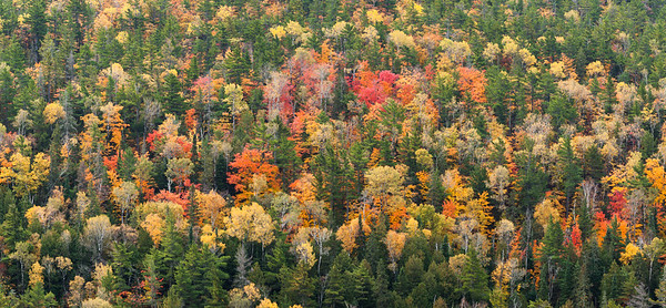 A Panorama of Autumn's Hues