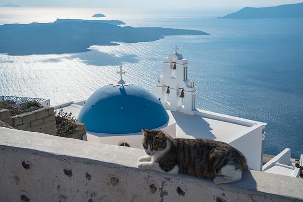 Sleeping Cat and Church, Santorini, Greece.