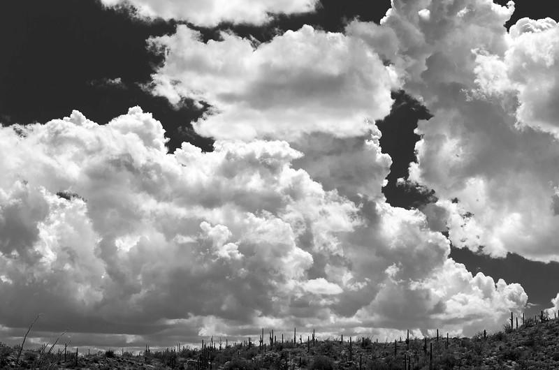 Monsoon Clouds Gathering, Saguaro East National Park