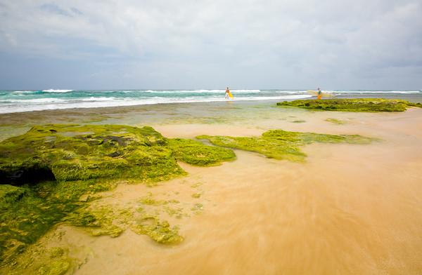 Surfs up - Hawaii