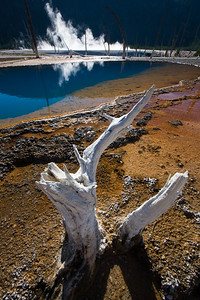 Yellowstone Art