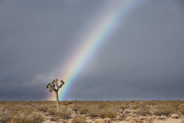 JOSHUA TREE RAINBOW