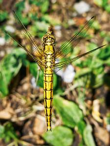 Dragonfly - Piesok - 2015-07-26