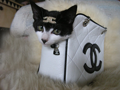 "Chanel ""Kouture Kitty"""