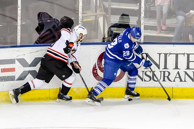 Portland Pirates regular season contest against the Toronto Marlies at the Cross Insurance Arena in Portland, Maine on 3/11/2016. (Photo by Michael McSweeney/Portland Pirates)