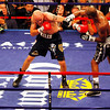 18 October 2008: Kelly Pavlik (black trunks) and Bernard Hopkins (black trunks, white trim) exchage punches during their 12 round bout in Atlantic City, New Jersey.  Hopkins won by decision