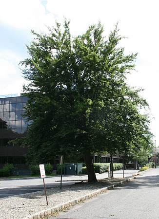Linpro Office Building, South St. Morristown, NJ 1982, photos in 2009