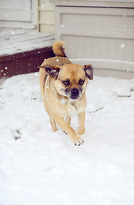 February 10th - 041/365  Long Island got slammed with over 20 inches of snow today. It was still coming down too hard to let the kids out to play but I did sneak into the backyard to play with Sadie for a bit. Run snow pup, run!