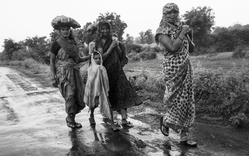 The rains last years has been equally unpredictable, some of the fields of lentils were burnt due to late rains. Women returning to home after work.