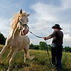 Joe Guy works with a problematic horse at the Fikes' ranch in Hamilton, Ala. Sunday, May 24, 2009. The stallion had turned antisocial and violent after spending 6 years inside a booth and seeing the daylight only when he was taken out to mate. Guy will fix him in less than a week.