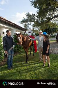 Horse-159
