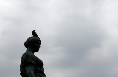 Pidgeon on statue head - Part 1