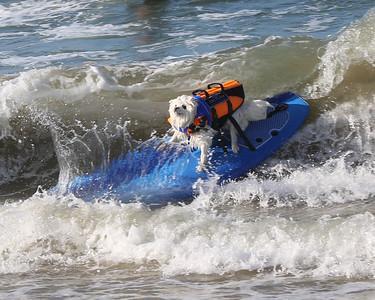 2014 surf dog