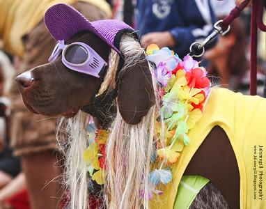Surf Dog #2 9-18-2010