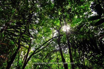 Amazon Jungle Shade