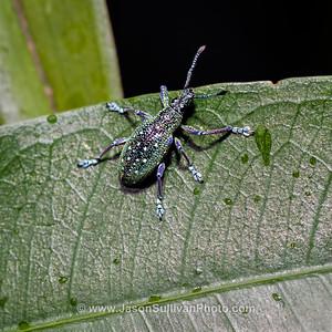 Climbing Beetle