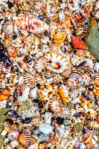 Mosaic of Nature