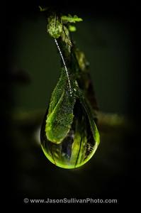 Rainforest Droplet