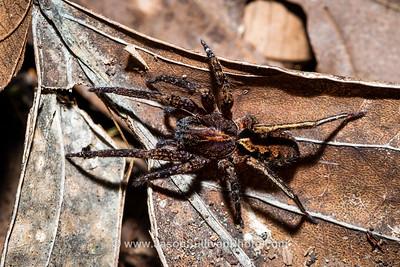 Jungle Crawler