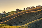 View in photo store: Warm Hillside