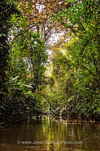 Jungle River Drift