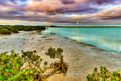 Mangrove Wetlands