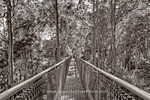 View in photo store: Walking in Tree Tops