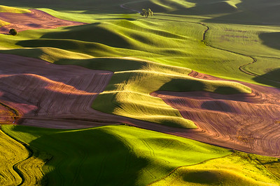 Dancing Light, The Palouse - Award of Merit