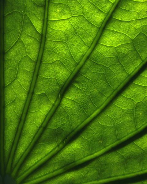 "CarolSimonettismall mono""greenweb"""