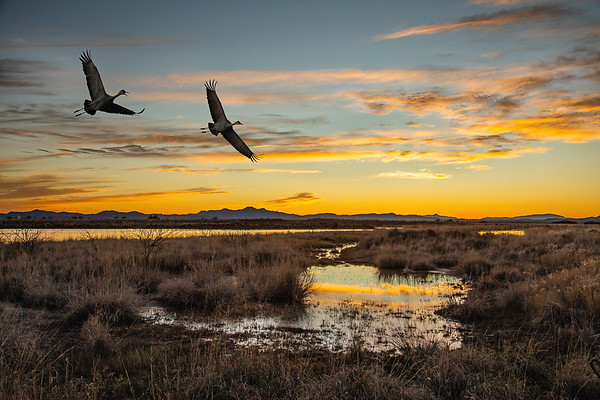 01.  Sandhill Cranes at Sunset - PSA Score 11