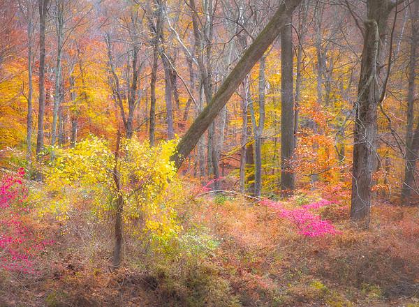 Magical Forest - Lane Lewis - PSA Score 9