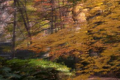 13 Fall Colors