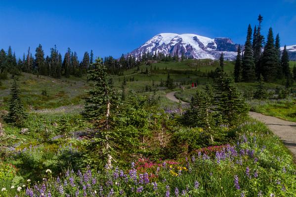 23Mt Rainier Walk