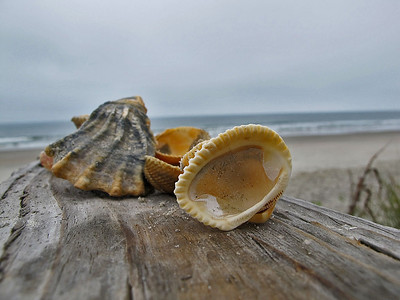 19	Sea shells and seashore
