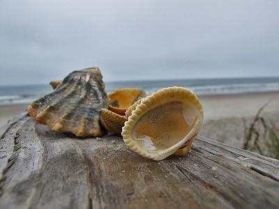 19Sea shells and seashore