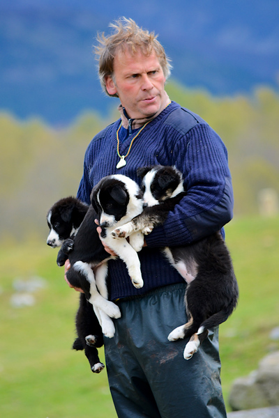 12	Highland Shepherd & Pups