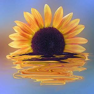 Sunflower Sunset - Pam Bredin - PSA 8 Points