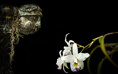 Smell the Orchids- Regina Krzesicki