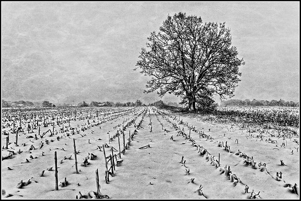 Lone Tree by Gary Emord