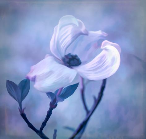 4. dogwood bloom