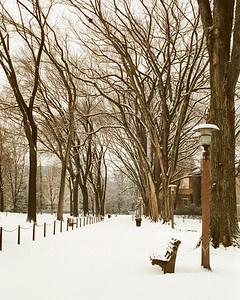 """""""Winter Elms"""""""